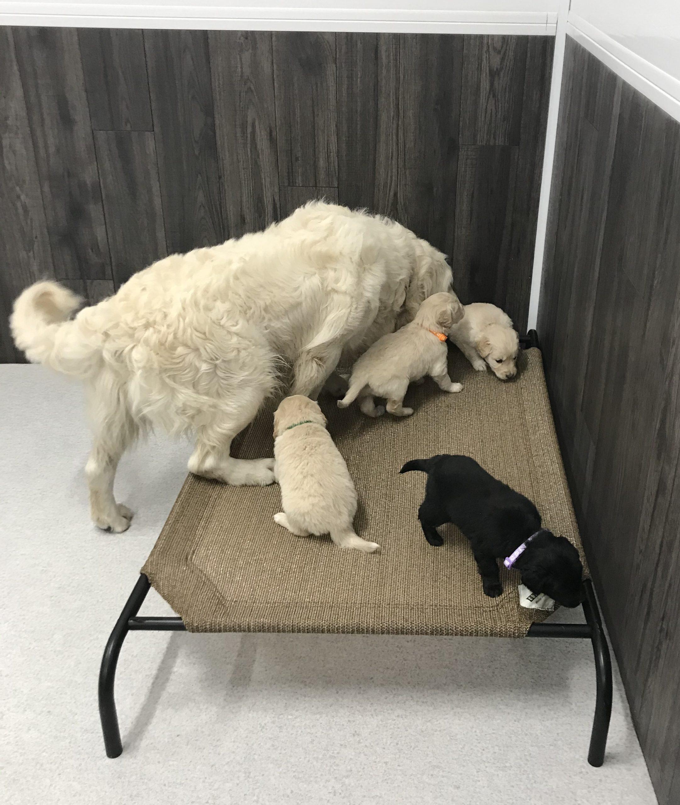Dad time at 4 weeks old