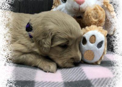 So Sleepy!
