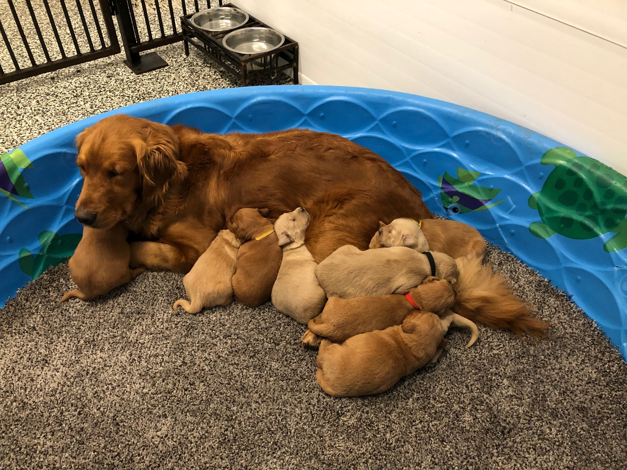 Trixie and Her Pups