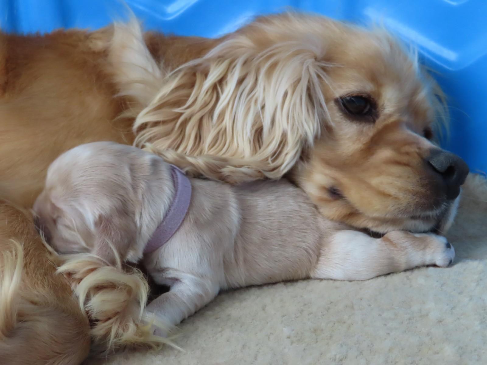 Mama Snuggles