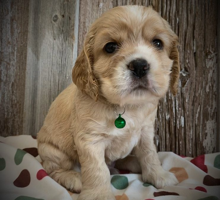 Gus-  AVAILABLE